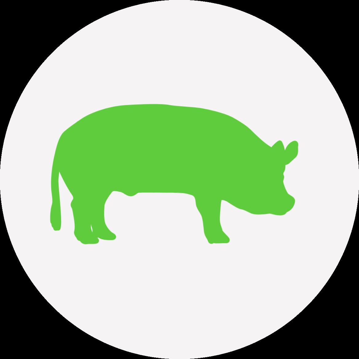 Hog roast catering icon